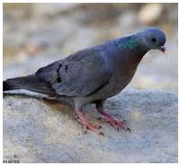 Control de plagas: palomas y otras aves