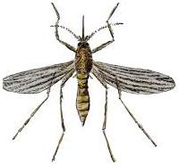 Control de plagas: mosquitos