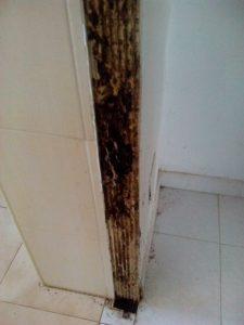 Imagen efecto de las termitas en puerta