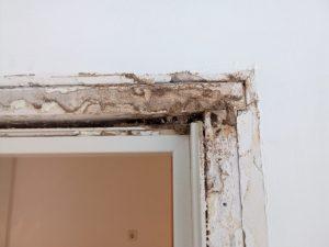 Imagen de efecto de termitas en puertas y bastidores